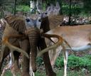 deerlephant.png