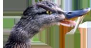 duckhead.png